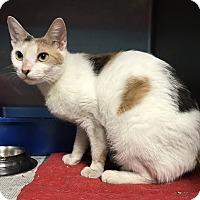 Adopt A Pet :: Piper - Newport, NC