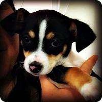 Adopt A Pet :: Valentino - Tijeras, NM