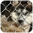 Photo 2 - Husky Mix Dog for adoption in Mission Viejo, California - Mala