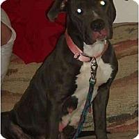 Adopt A Pet :: Blue - Wauwatosa, WI