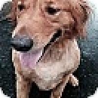 Adopt A Pet :: Tucker - Salem, NH