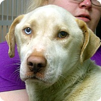 Adopt A Pet :: Jack - baltimore, MD