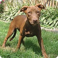 Adopt A Pet :: Jenna - Lewisville, IN
