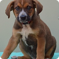 Adopt A Pet :: Kyrie - Pleasant Plain, OH