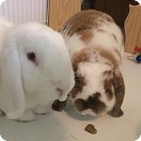 Adopt A Pet :: Mr. Darcy and Lizzie - Moneta, VA