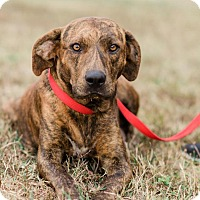 Adopt A Pet :: Sarah $125 - Seneca, SC