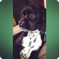 Adopt A Pet :: Bella -Adopted! - Kannapolis, NC