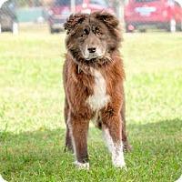 Adopt A Pet :: TEX - Vero Beach, FL