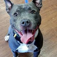 Adopt A Pet :: Clyde - Millington, TN