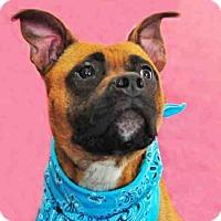 Adopt A Pet :: JULEP - Louisville, KY