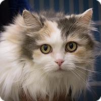 Adopt A Pet :: Tulip - Gardnerville, NV