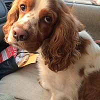Adopt A Pet :: Loli - Staten Island, NY