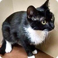 Adopt A Pet :: Diana - Oswego, IL
