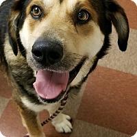 Adopt A Pet :: Jimmy - Hendersonville, NC