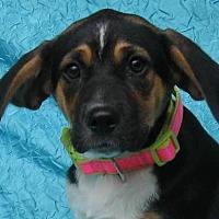 Adopt A Pet :: Blossom Warner-Smith - Cuba, NY