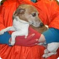 Adopt A Pet :: Jade ADOPTED!! - Antioch, IL