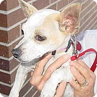 Adopt A Pet :: Joey - Ogden, UT