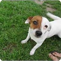 Adopt A Pet :: Daisy in Houston/Bay City - Houston, TX