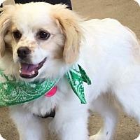 Adopt A Pet :: Casper - Sacramento, CA