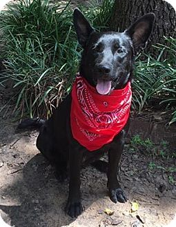 German Shepherd Dog Mix Dog for adoption in Kaufman, Texas - Annabelle
