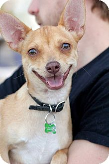 Terrier (Unknown Type, Small) Mix Dog for adoption in Los Angeles, California - Murphy