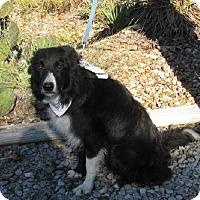 Adopt A Pet :: Jake - Oakland, AR