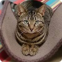 Adopt A Pet :: Rumor - Austintown, OH
