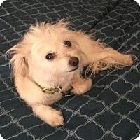 Adopt A Pet :: Eddy - Encino, CA