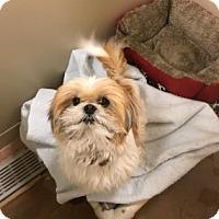 Adopt A Pet :: David Bowie fka Teddy - Philadelphia, PA