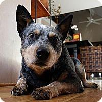 Adopt A Pet :: Mick - Siler City, NC