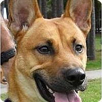 Adopt A Pet :: BIG - Kingwood, TX