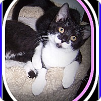Adopt A Pet :: PENNY - SUCH A SWEETHEART!! - South Plainfield, NJ