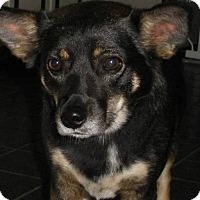 Adopt A Pet :: Titus - Franklin, TN