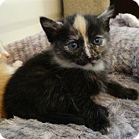 Adopt A Pet :: Amy-Big Bang Bunch - Florence, KY