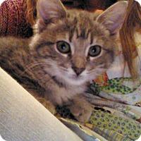 Adopt A Pet :: Melon - Bentonville, AR