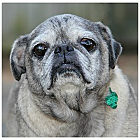 Adopt A Pet :: Doug - Forked River, NJ