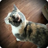 Adopt A Pet :: Georgia - Fairborn, OH