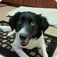 Adopt A Pet :: Sissy - Chambersburg, PA