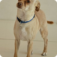 Adopt A Pet :: Dobby - Culver City, CA