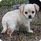 Adopt A Pet :: Princess (1.5 lb) Video!