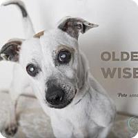 Adopt A Pet :: PETE - Camarillo, CA