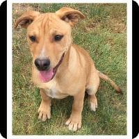 Adopt A Pet :: DALTON - Winchester, CA