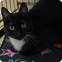 Adopt A Pet :: Jamie Lannister - Decatur, GA