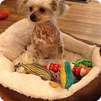 Adopt A Pet :: Kosmos (fostered in AL) - Gilford, NH