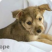 Adopt A Pet :: Hope - Mission Viejo, CA