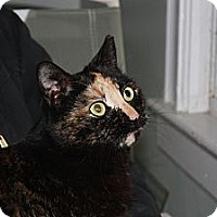 Adopt A Pet :: Susie (LE) - Little Falls, NJ