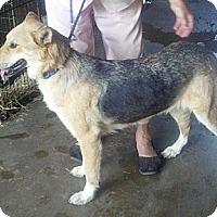 Adopt A Pet :: Gretal - Moulton, AL