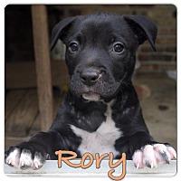 Adopt A Pet :: Rory - Baton Rouge, LA