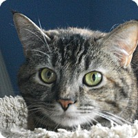 Adopt A Pet :: Mary - Colmar, PA