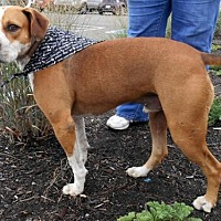 Adopt A Pet :: Elvis/jackie - White Bluff, TN